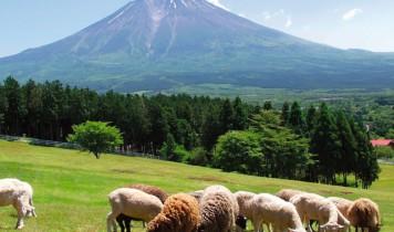 夏にひんやり!朝霧高原アイスクリーム作り・乳搾り体験と雲上の富士山五合目