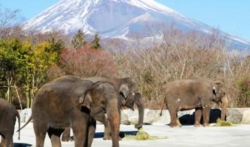 富士サファリパーク&天空のダリア祭りと地ビール飲み放題バイキング