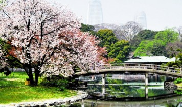 隅田川桜堤と八芳園の桜会席(HT)