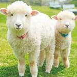 マザー牧場で動物とのふれあい