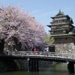 諏訪高島城址の桜