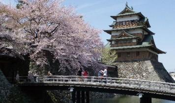 約1500本の高遠小彼岸桜と諏訪の浮島高島城の桜(HT)