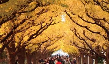 秋色の街めぐりと東京スカイツリー