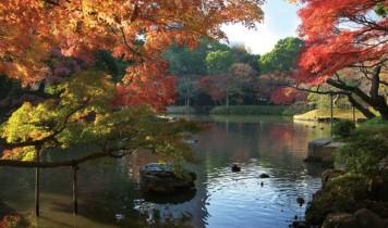 秋の庭園めぐりとホテルオークラの優雅なランチ(HT)